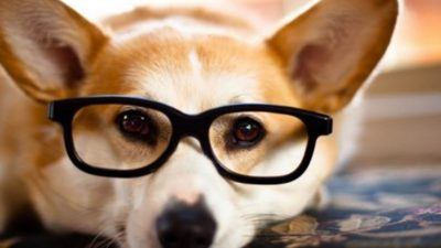 Hayvanlar Arasında En Akıllısı Hangisidir?