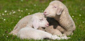 Hayvanlarda annelik insanlarda ki anneliğe benziyor mu?