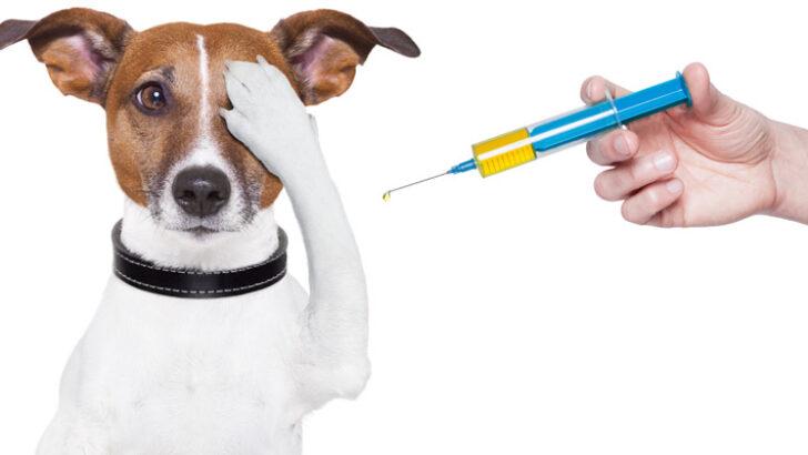 Köpekler Aşıdan Kaç Gün Sonra Yıkanır?