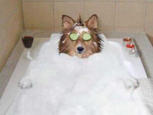 Köpekler ne sıklıkla yıkanmalı? Köpeklerimizi yıkarken nelere dikkat etmeliyiz?